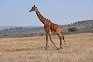 akagera attractions