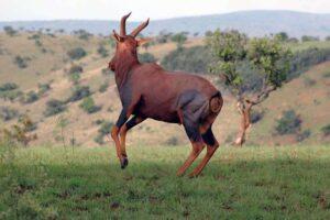 rwanda safaris akagera