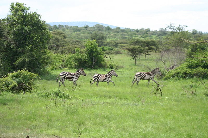 Rwanda budget safaris