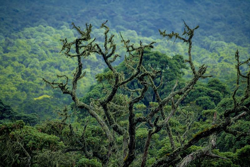 canopy walks Rwanda